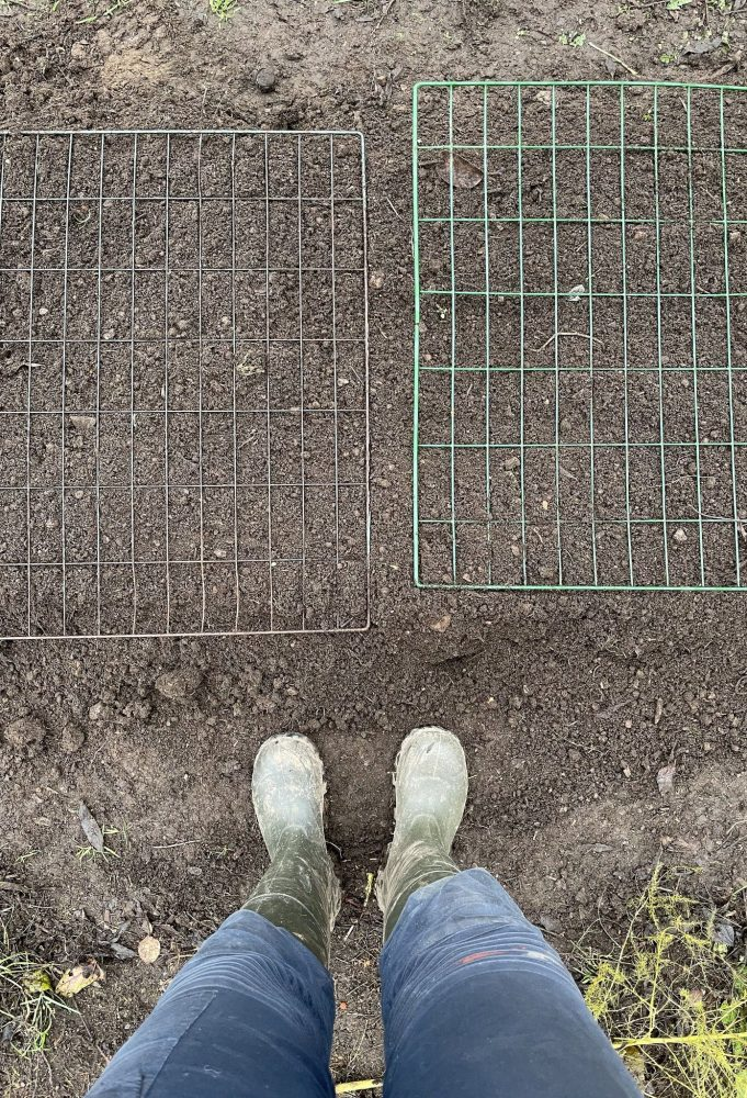 Wire mesh on top of a growing bed, seen from above.