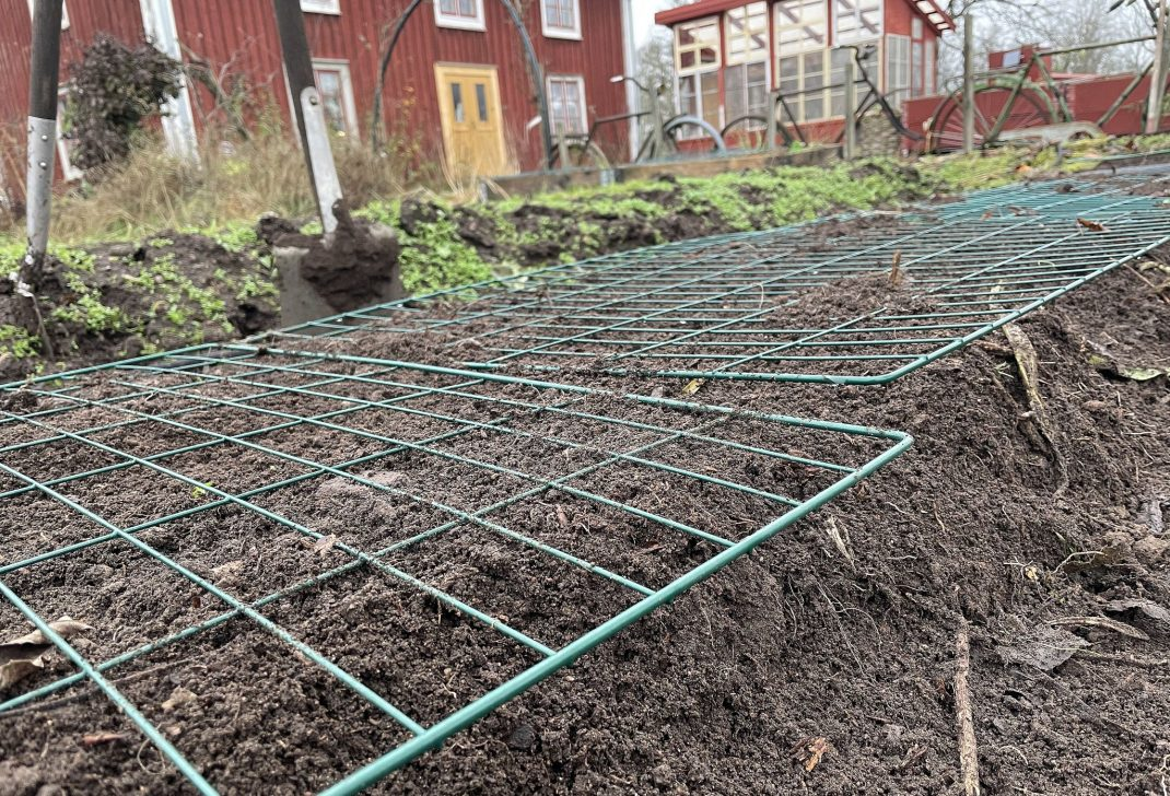 Pests in the compost, close-up of bed with wire mesh on top.