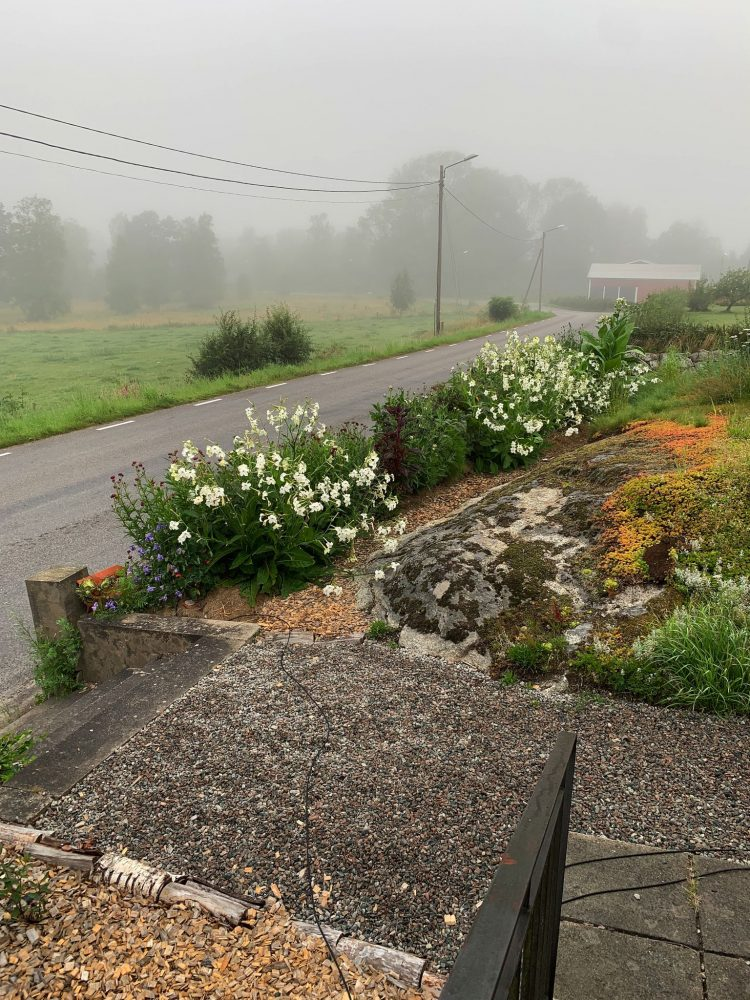Overview of a garden with a flower bed and a road.