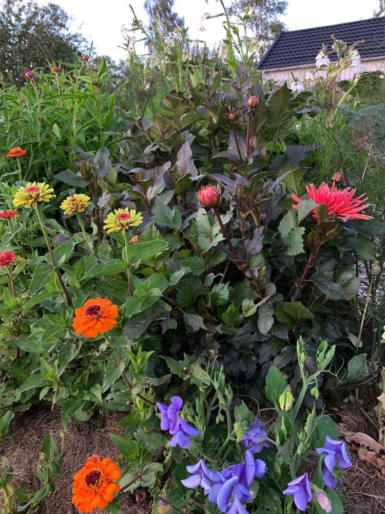 Blandade blommor växer sida vid sida i rabatten.