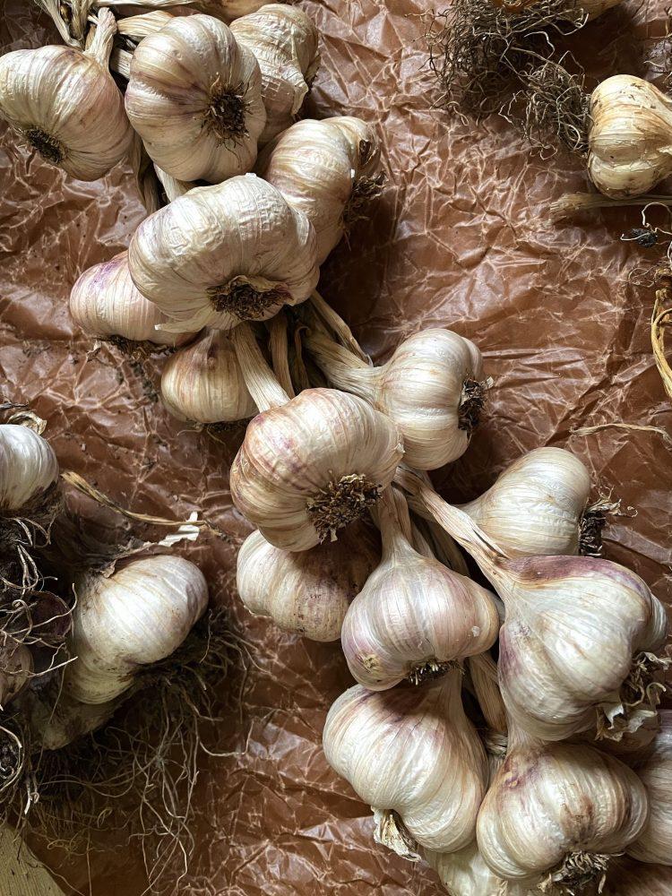 Keeping garlic fresh in a garlic braid.