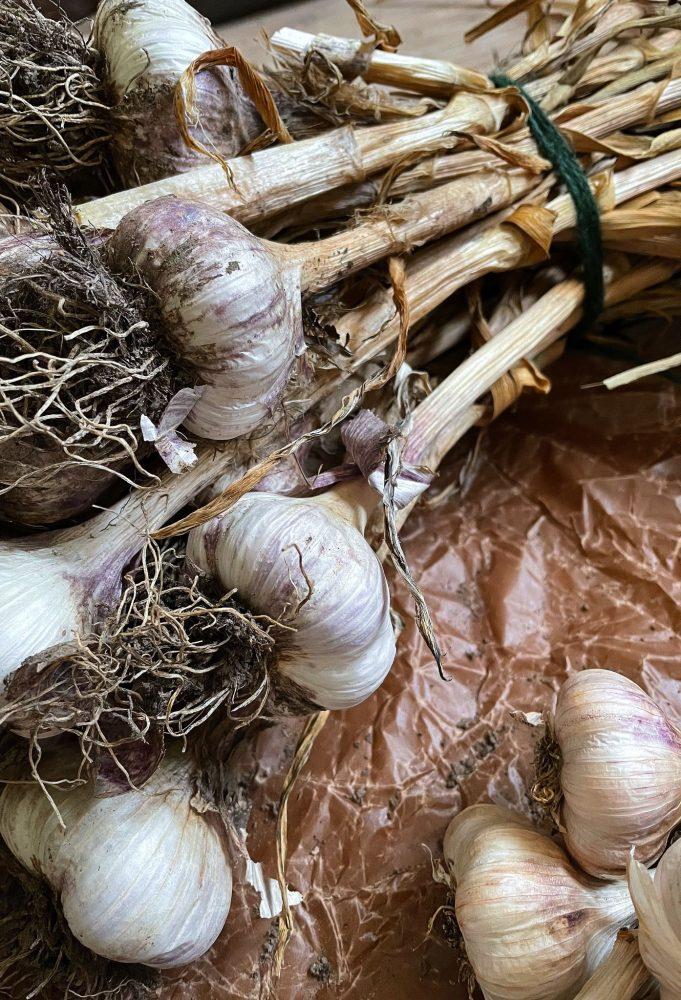 A large bundle of garlic.