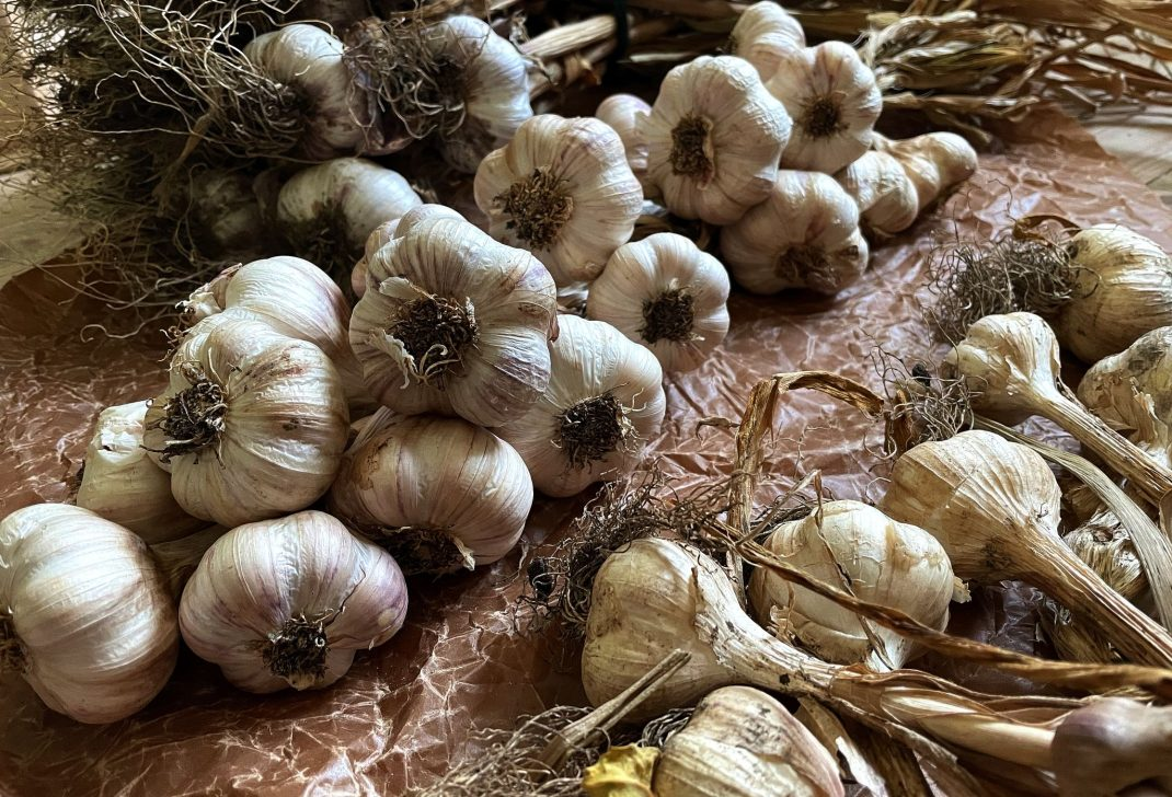 Store garlic in wax paper.