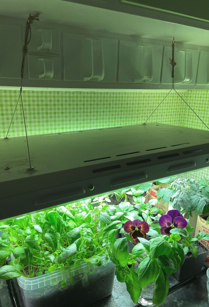 Store-bought or diy grow light? Large grow lights handing over a bench in a kitchen.
