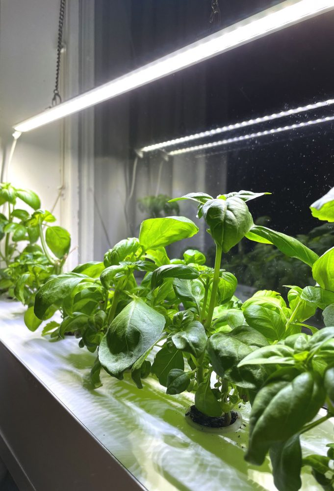 Green plants in a cultivation box near a window.