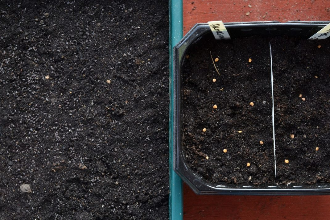 Broadcast seeding, two troughs with soil and seeds on top.