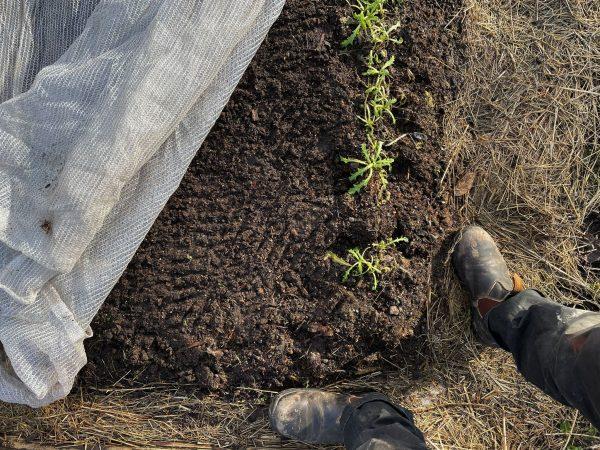 Duk över odlingsbädd, undanvikt och blottar jord och några gröna växter.
