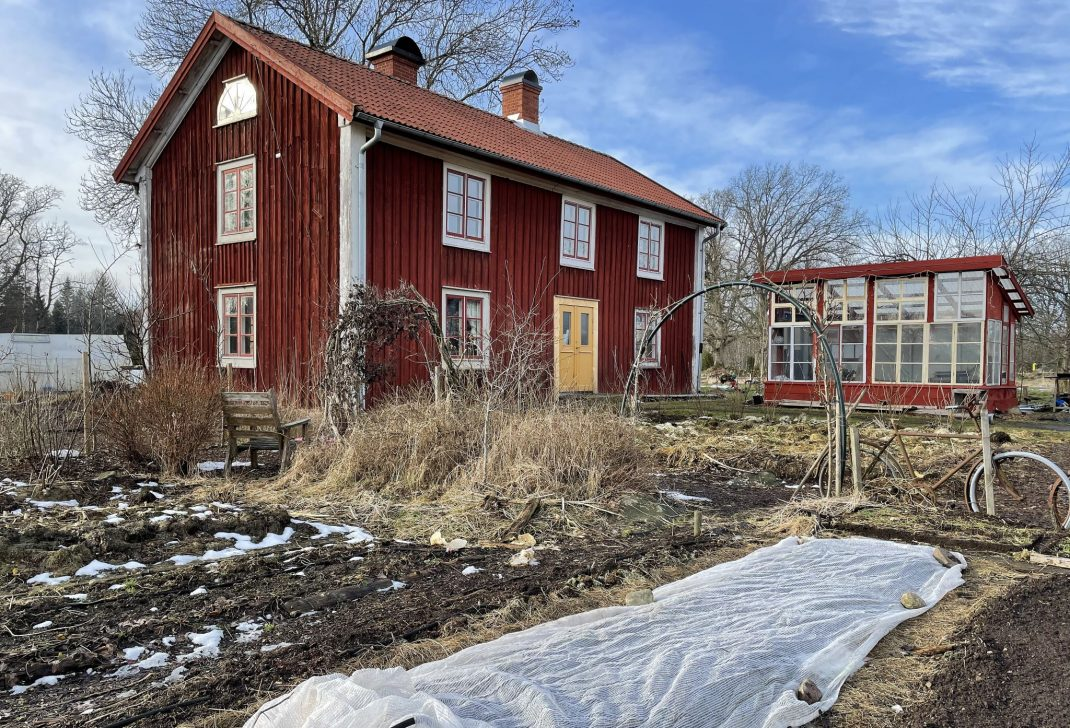 Growing spinach in cold soil, a kitchen garden with a red house.