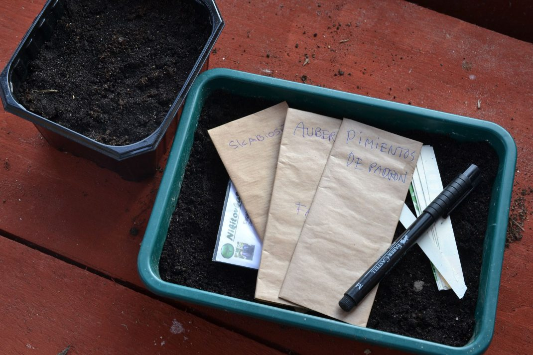 A green trough with soil and seed packets on the ground, preparations for broadcast seeding.
