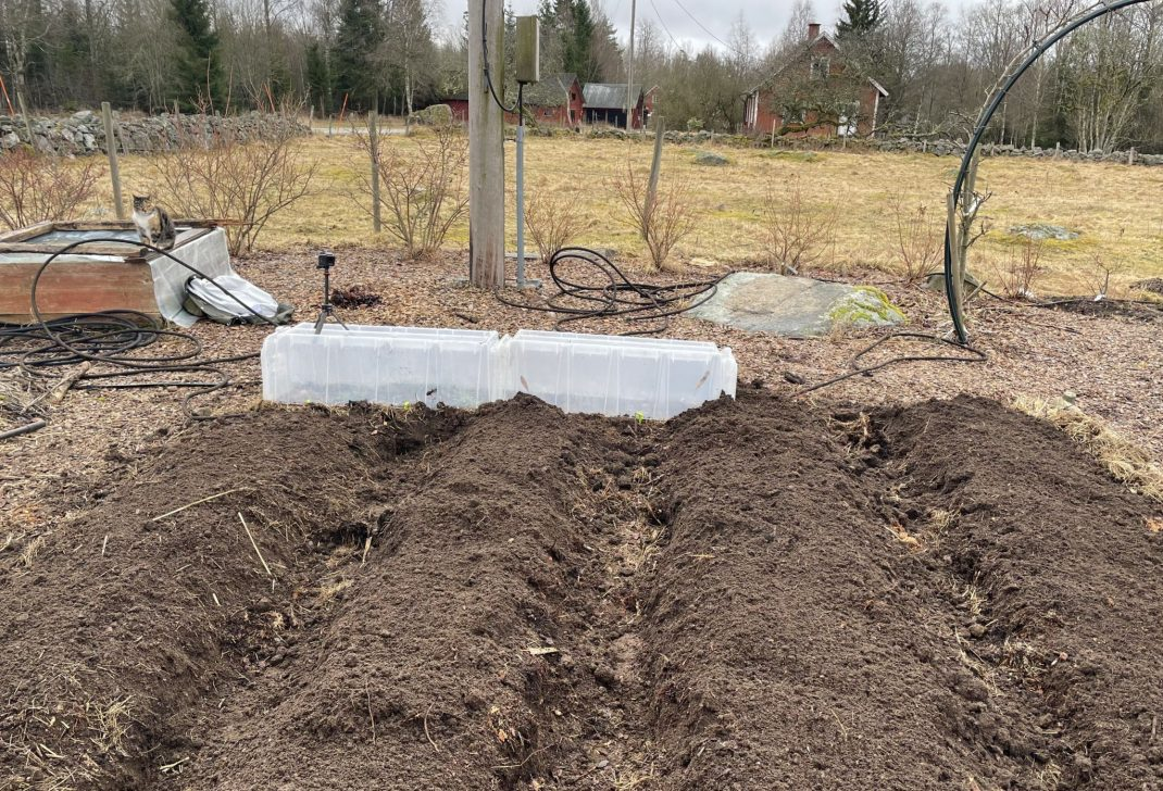 Four beds in the raised bed garden.