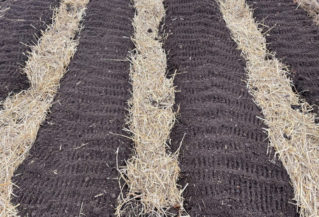 Four beds with straw.