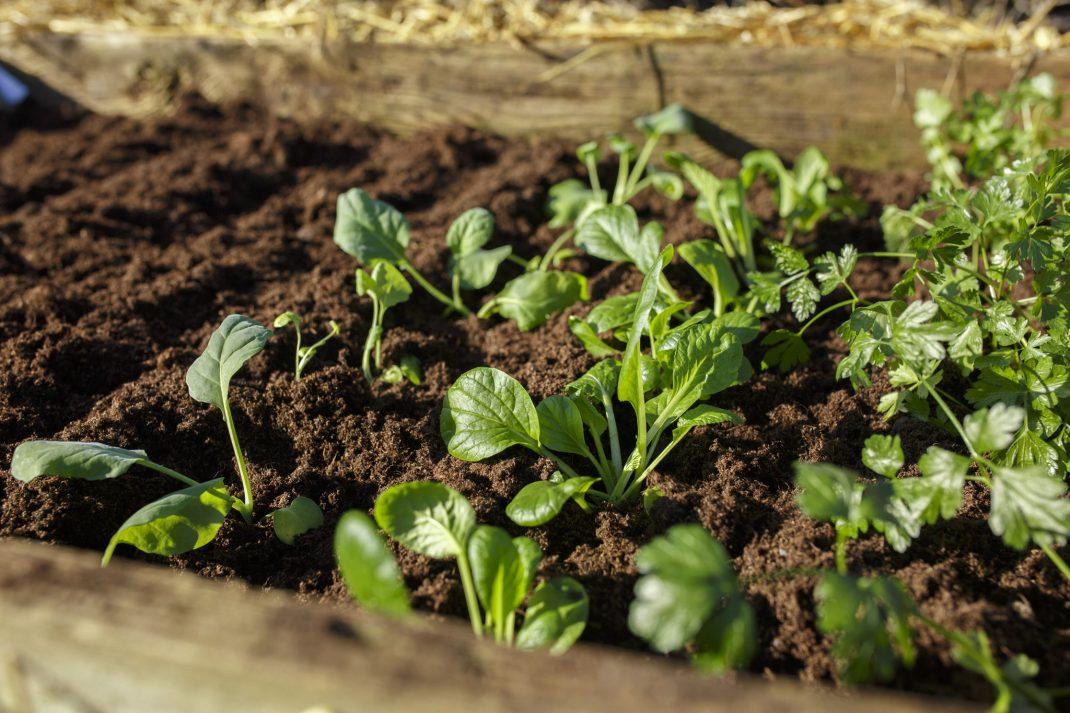 Plantering i varmbänk